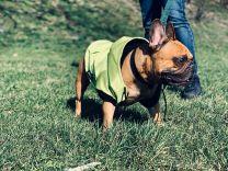 Kurtka przeciwdeszczowa dla psa limonkowa